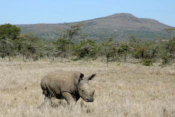 Baby-White-Rhino.jpg